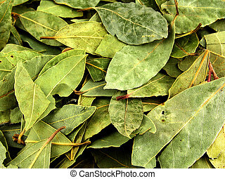Seasoning, bay leaf As a background, Laurels