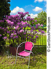Chair and rhododendron in the garden