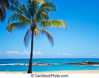 Palm trees on the sandy beach in Hawaii - Coconut Palm tree...