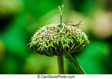 A mantis on the flower - Photo was taken in Dallas...
