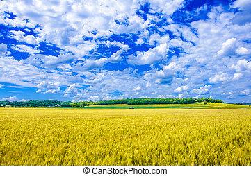 A wheat farm in sunny day in Kansas