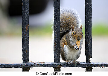 squirrel having snack - Squirrel having snack sitting on the...