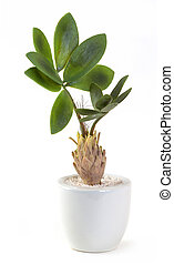 Artificial Plant - Close up Artificial Plant isolated on...