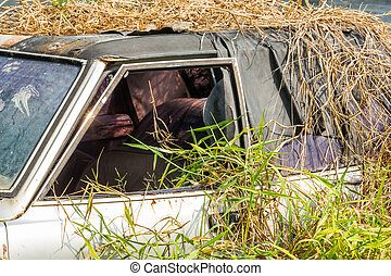 Car wreck in overgrown grasses - Close up old and damaged...