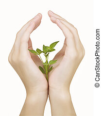 Hand and plant isolated on white ba