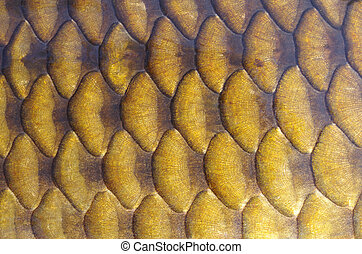 Fish scales - Gold carp scales close-up