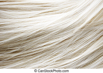 Blonde Hair - Healthy blonde hair - close up image
