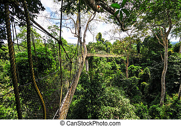 Canopy Walkway of Kakum National Park - Kakum National Park...