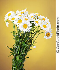 bouquet of Fresh daisies flowers isolated on yellow background