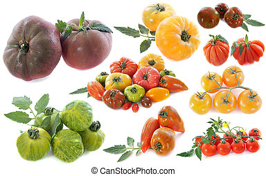 ancient varieties of tomatoes in front of white background