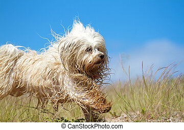 More cheerful Wet Dog - A cheerful and slightly wet dirty...