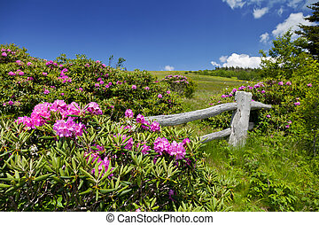 Roan Mountain - Carvers Gap, Roan Mountain State Park, North...