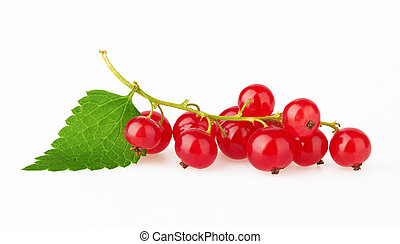 Red Currant with leaf