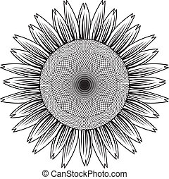 sunflower out line vector - the Vector illustration...