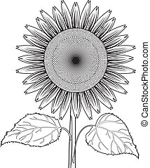sunflower with leaves out line vec - the Vector illustration...