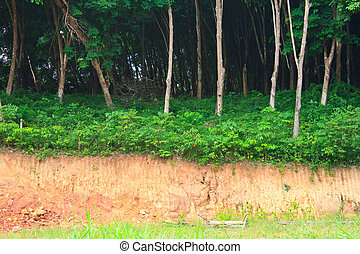 Gravel deposits cut away through forests .