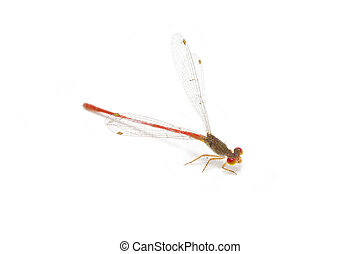 Little colorful dragonfly isolated on white background.