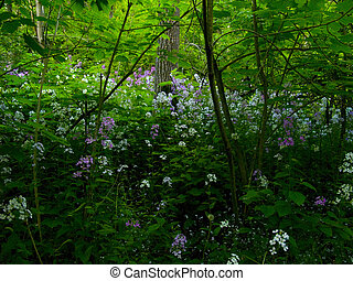 Wildflowers Deep Forest - Wildflowers growing in a deep and...