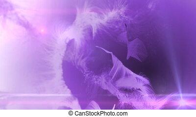 fur background color