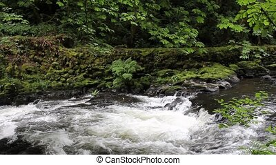 Cedar Creek in Woodland Washington is a Beautiful Stream...