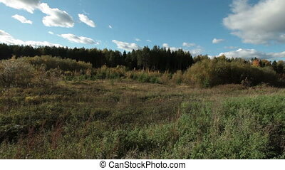 Clear day in village - view of forest and meadow