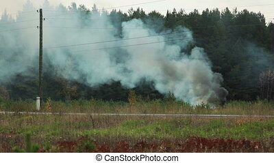 View of environmental hazards - burning forest, close-up