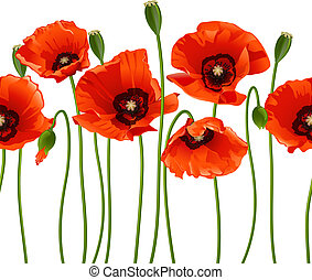 Red poppies in a row Isolated on white background Vector...