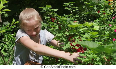Little girl with red currants in garden