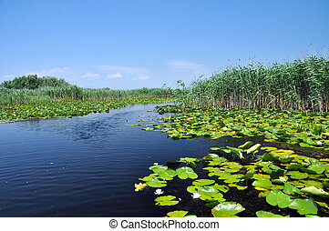 Swamp in the Danube Delta - Swamp vegetation in the Danube...