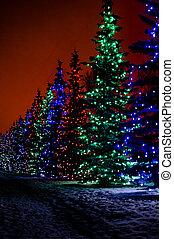 Christmas Night, Christmas Light - A bunch of colorful...