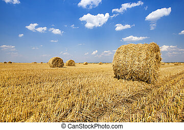 straw stack - the straw put in a stack after the harvest of...