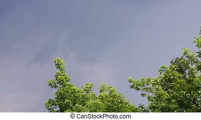 White lightning strike in summer - White lightning strike...