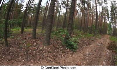 Running POV in the forest