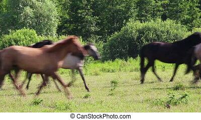 herd of horses running on pasture