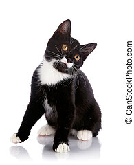 Black and white small kitten sits - Black and white kitten...