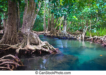 The root and crystal stream of the mangrove forest, Krabi,...
