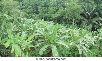 Tropical forest with palm trees