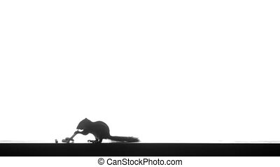 Silhouette of a chipmunk - Video 1920x1080p - Silhouette of...