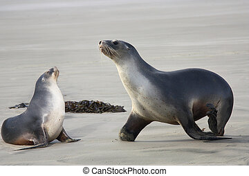 sea lions two - two cute sea lions on the beach