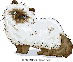 Himalayan Cat - Illustration of Himalayan Cat