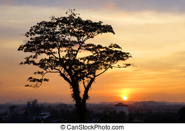 Tree sunset - Tree silhouette on sunset