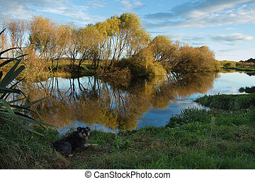 Autumn Reflection - Autumn reflection of a river with a dog...