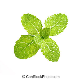 Peppermint leaf - High resolution fresh and green peppermint...