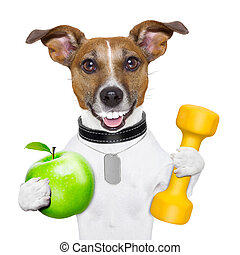 fitness and healthy dog - healthy dog with a big smile and a...