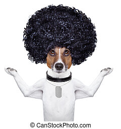 afro dog  - afro look dog with very big curly black hair