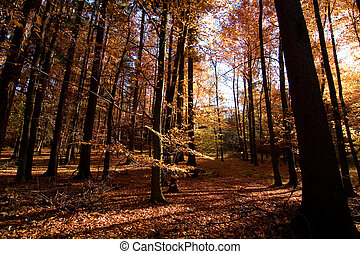 Dark Autumn Forest - A Romantic autumn forest with golden...