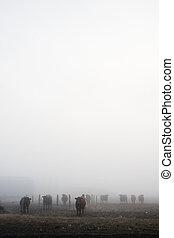 Cows in Fog - Cows in the prairie winter fog
