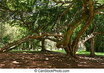 Tropical tree with huge branches