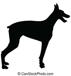 Doberman Silhouette - A black silhouette of a Doberman...