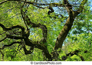 A tree and branches